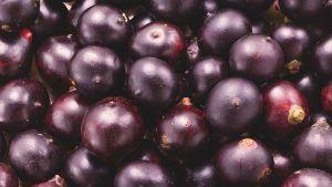 El Acai Berry